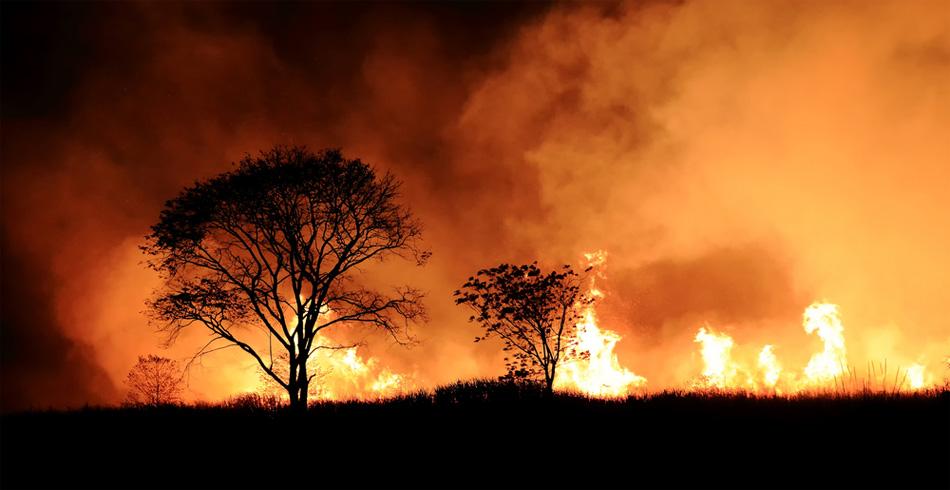 bushfire - photo #33